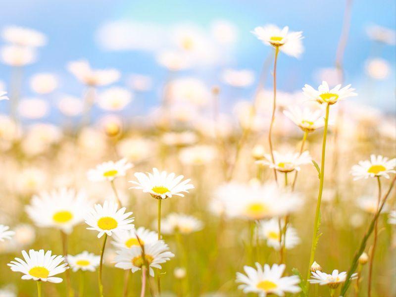 ¿Qué es la alergia primaveral?