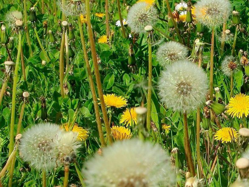 La alergia en primavera