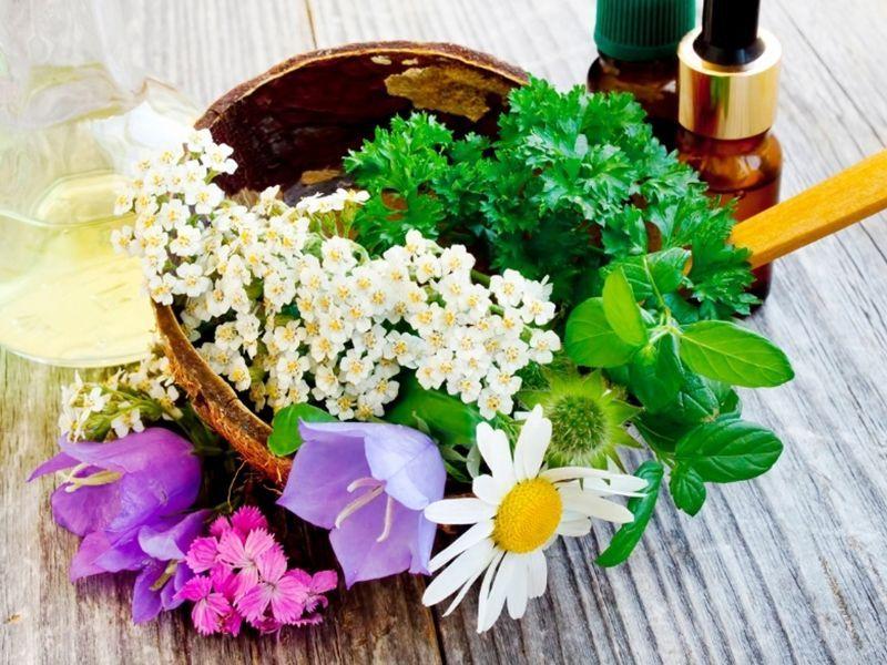 Plantas medicinales vs medicamentos